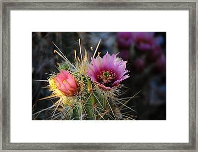 Pink Cactus Flower Framed Print