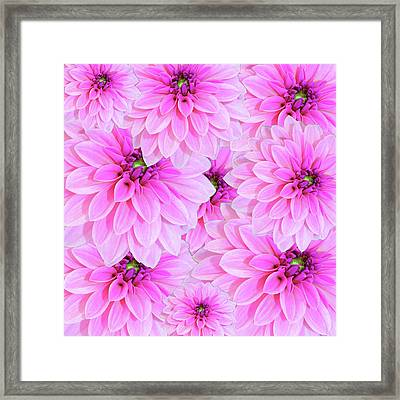 Pink Dahlia Flower Design Framed Print