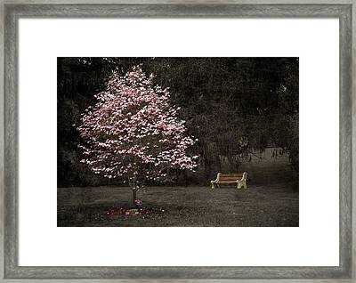 Pink Dogwood Tree And A Bench Framed Print
