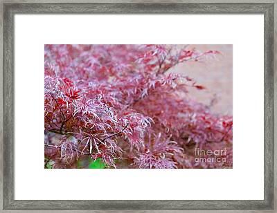 Pink Fairy Tale Framed Print