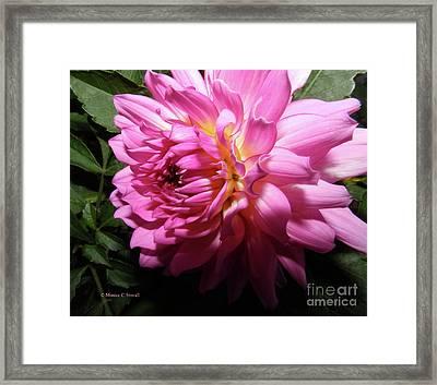 Pink Flower No. 58 Framed Print