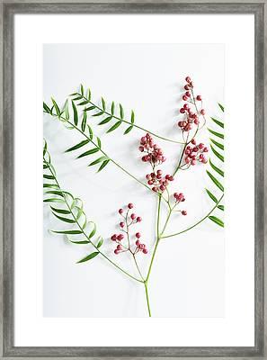 Pink Peppercorn Branch On White Framed Print by Amy Neunsinger