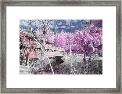Pink Sachs Framed Print