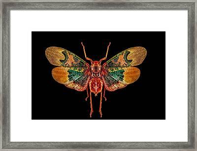 Planthopper Lanternfly Framed Print