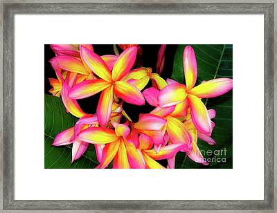 Plumeria Flowers - Tropic Hawaii Framed Print by D Davila