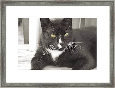 Poes Black Cat Framed Print by JAMART Photography