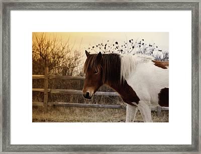 Pony Warm Up Framed Print