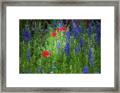 Framed Print featuring the photograph Poppies And Wildflowers by Mark Duehmig