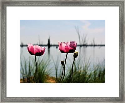 Poppies On Lake Mulwala 2 Framed Print