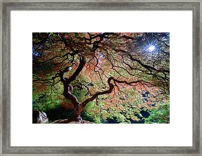 Framed Print featuring the photograph Portland's Little Giant by Rospotte Photography