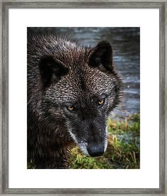 Portrait Niko Framed Print