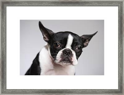 Portrait Of Dog Framed Print by Jupiterimages