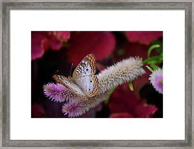 Framed Print featuring the photograph Posed Perfect by Michelle Wermuth
