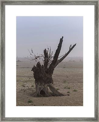 Framed Print featuring the photograph Prayer Of The Ent by Davor Zerjav