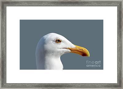 Pretty Western Gull In Profile Framed Print