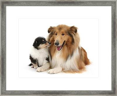 Framed Print featuring the photograph Proud Mother And Pup by Warren Photographic