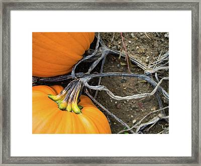 Framed Print featuring the photograph Pumpkins Entwined Together by Whitney Leigh Carlson