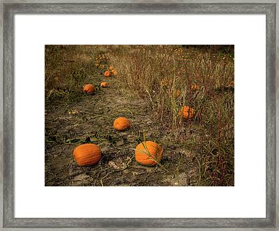 Framed Print featuring the photograph Pumpkins Lying In A Field by Whitney Leigh Carlson