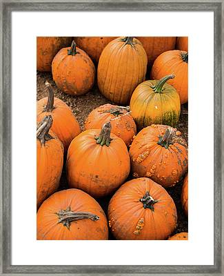Framed Print featuring the photograph Pumpkins Of Different Shapes by Whitney Leigh Carlson