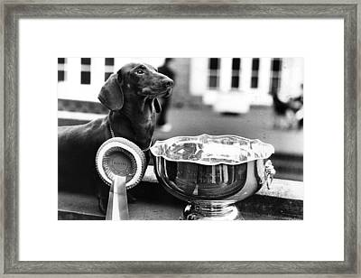 Pup Of The Year Framed Print by Evening Standard