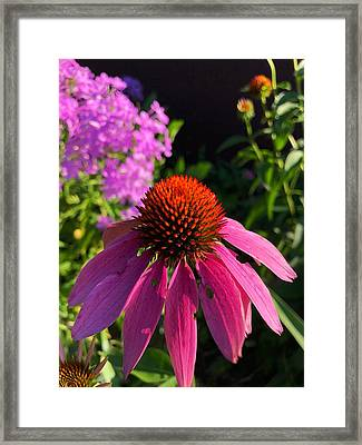 Framed Print featuring the photograph Purple Coneflower by Lukas Miller