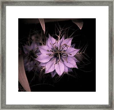 Purple Peculiarity Framed Print