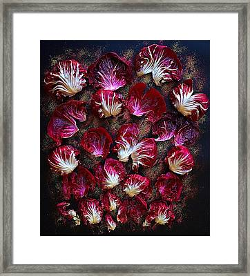 Purple Radicchio Framed Print