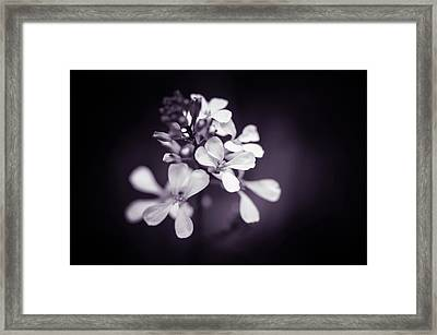 Framed Print featuring the photograph Purple Tears by Michelle Wermuth