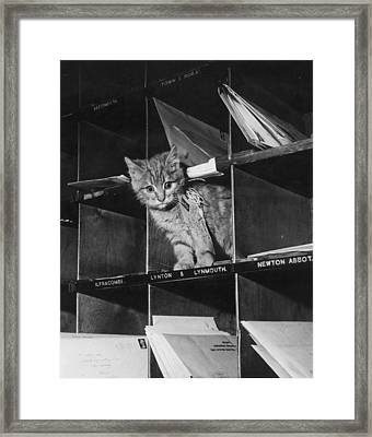 Pussy Cat Post Framed Print by Keystone
