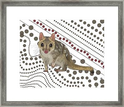 Q Is For Quoll Framed Print