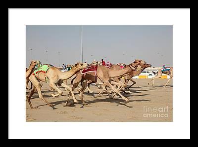 Jockeys Photographs Framed Prints