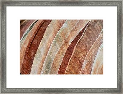 Rainbow Framed Print