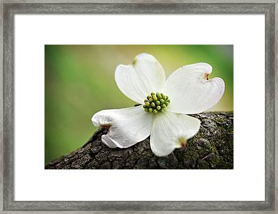 Framed Print featuring the photograph Raining Sunshine by Michelle Wermuth