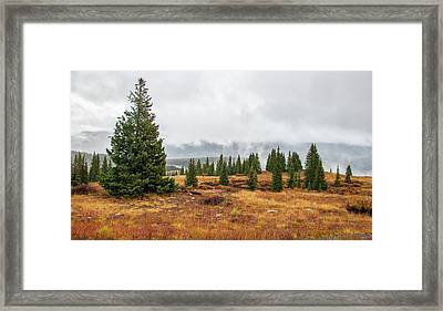 Rainy Day At Molas Pass Framed Print