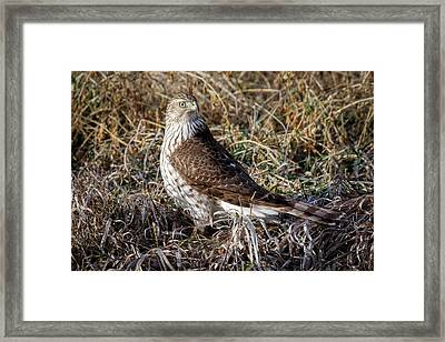 Framed Print featuring the photograph Ready by Scott Bean
