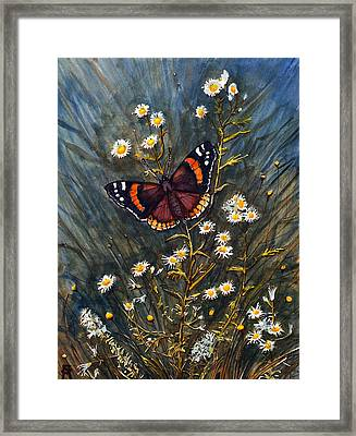 Red Admiral And Wild Aster Framed Print