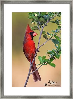 Red All Over Framed Print