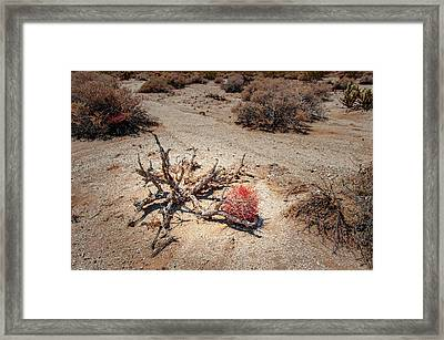 Red Barrel Cactus Framed Print