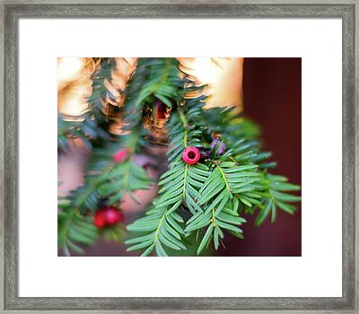Framed Print featuring the photograph Red Berry On Green by Scott Lyons
