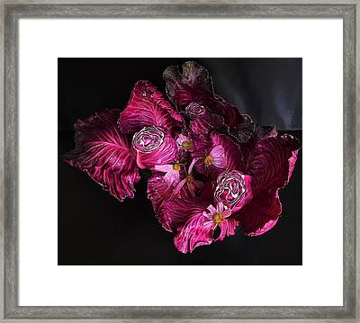 Red Cone Cabbage Framed Print