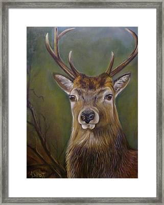 Red Deer Stag Framed Print by Janet Silkoff
