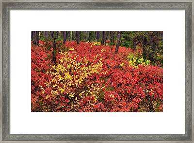 Red Forest Panoramic Framed Print by Leland D Howard