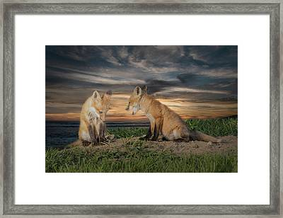 Red Fox Kits - Past Curfew Framed Print