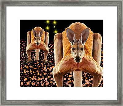 Red Kangaroos Framed Print