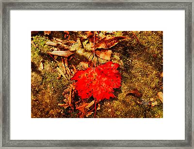 Red Leaf On Mossy Rock Framed Print