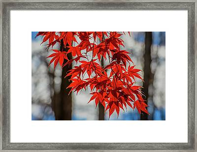 Framed Print featuring the photograph Red Leaves by Cindy Lark Hartman
