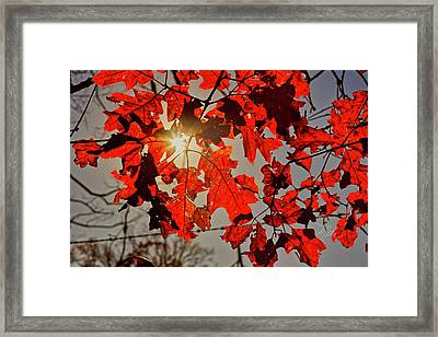 Red Leaves Framed Print
