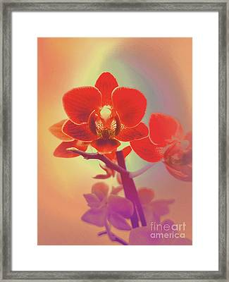 Framed Print featuring the mixed media Red Orchid  by Rachel Hannah