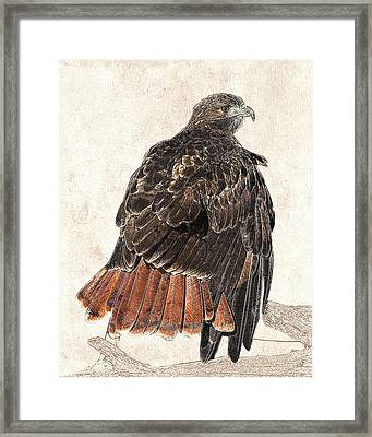 Framed Print featuring the photograph Red-tailed Hawk - Photographic Drawing by Dawn Currie