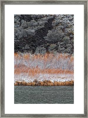 Red Willow Rio Framed Print